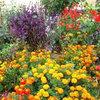 Выращивание рассады для цветника