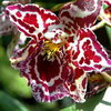 Выращиваем прекрасные орхидеи дома!