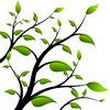 Весенняя защита коры плодовых деревьев