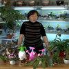 Уход за комнатными растениями - видеопособие