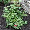 Весенние заботы на участке: цветы и кустарники.