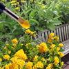 Сад - Желтый, белый, голубой - Вам понравился какой?