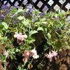 Растения в контейнерах как элемент ландшафтного дизайна