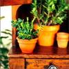 Комнатные растения - цветы жизни