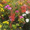 Цветник на склоне
