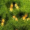 Паутинный клещ и комнатные растения