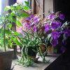 Обеспечение растений светом
