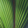 Уход за растениями: формирование растений