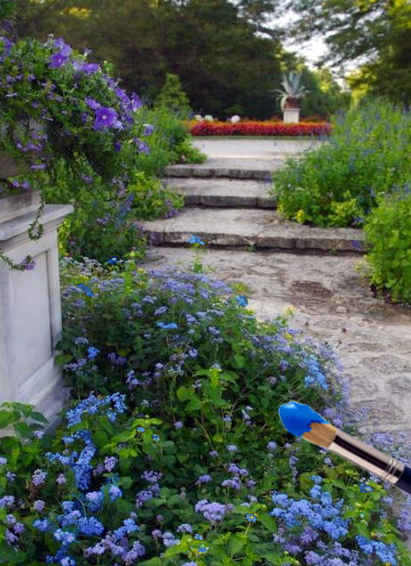 Синий сад.