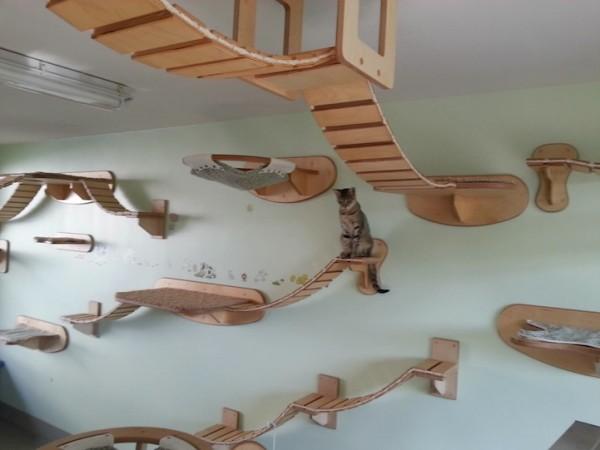 Интерьер для кошек.