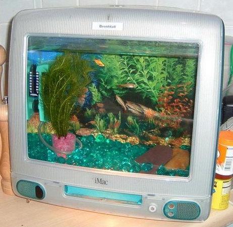 Как сделать аквариум для рыб
