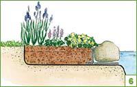 Использование для оформления прибрежной, болотной флоры